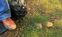 Observer Проходимец -  полноприводная электроколяска - вездеход в лесу